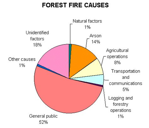 Cause effect essay about forest fires 2017